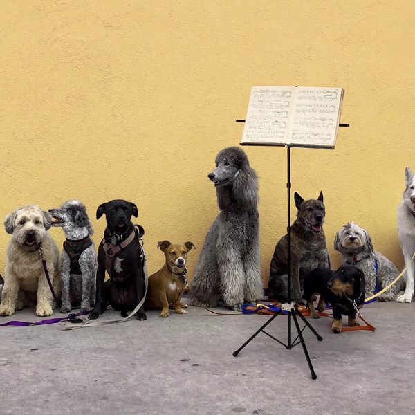 Concert for Dogs | Regional News